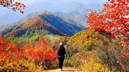 登高赏秋--万山红遍,层林尽染,金秋徒步